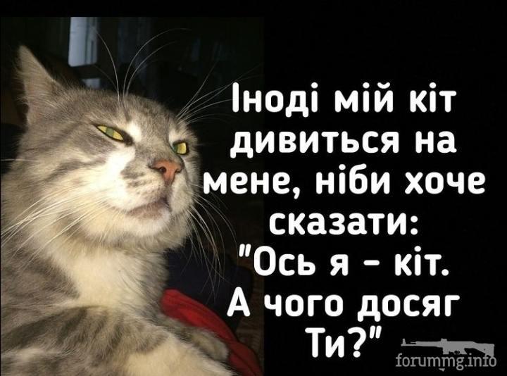 119109 - Смешные видео и фото с животными.