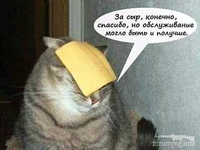 119110 - Смешные видео и фото с животными.