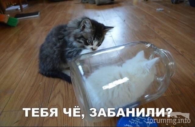 119111 - Смешные видео и фото с животными.