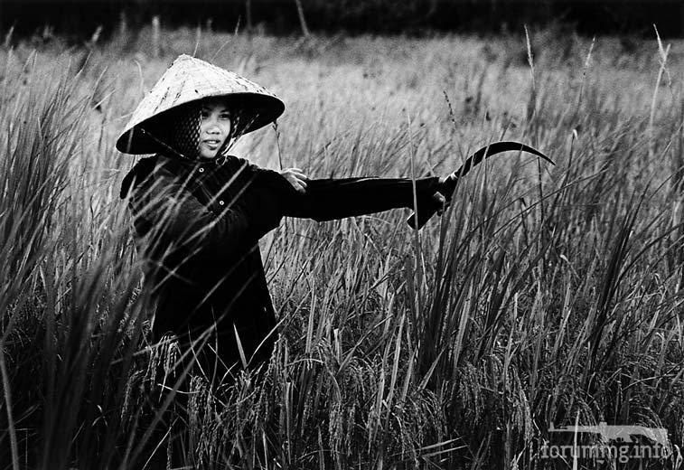 119499 - Война во Вьетнаме. Фототема