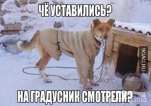 119718 - Смешные видео и фото с животными.