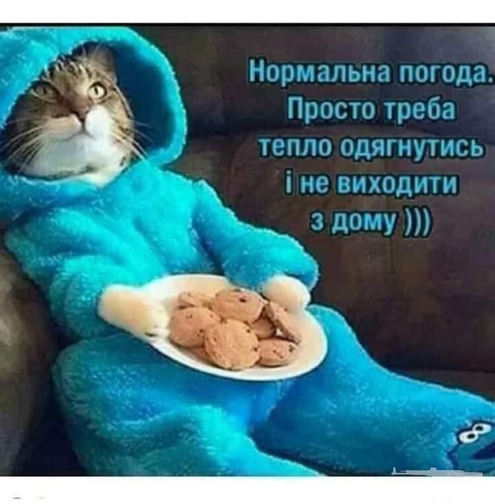 119720 - Смешные видео и фото с животными.