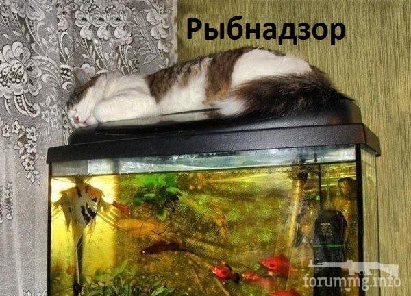 119722 - Смешные видео и фото с животными.