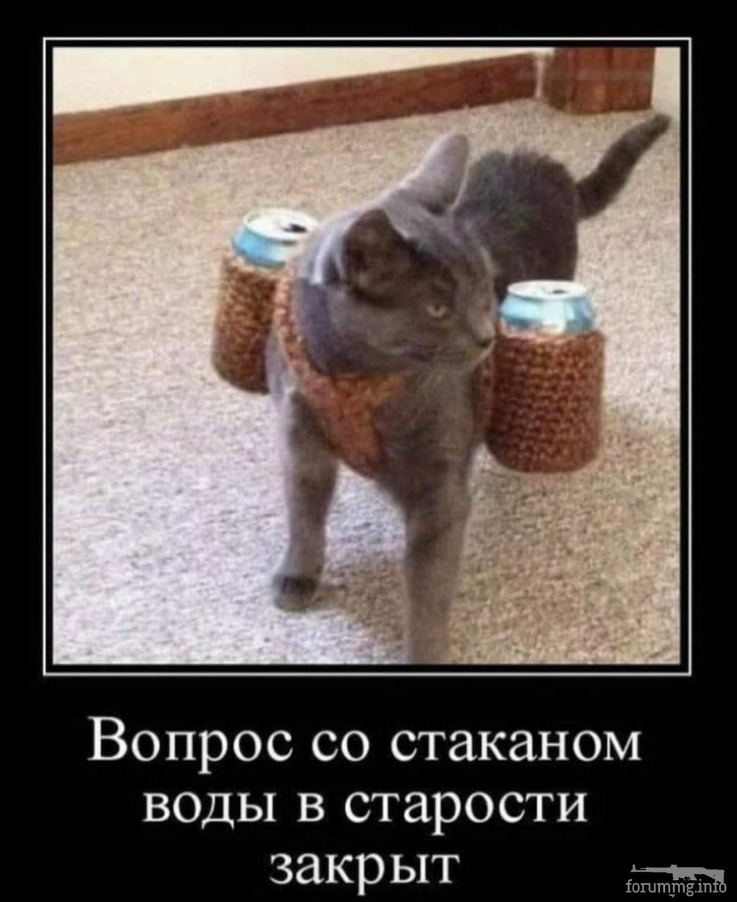 119839 - Смешные видео и фото с животными.