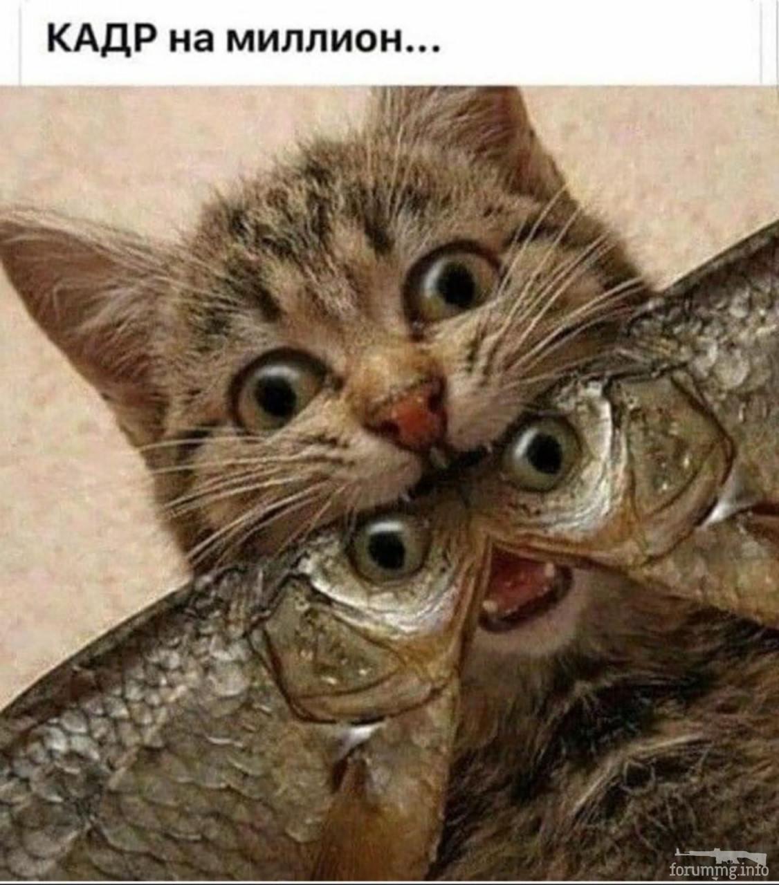 120550 - Смешные видео и фото с животными.