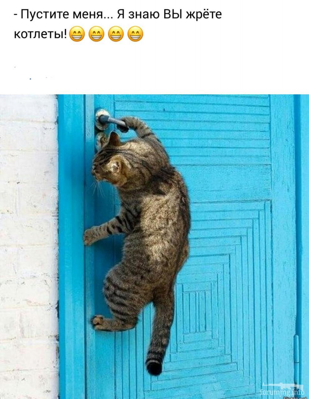 120593 - Смешные видео и фото с животными.