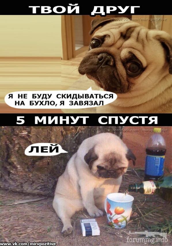 120701 - Пить или не пить? - пятничная алкогольная тема )))