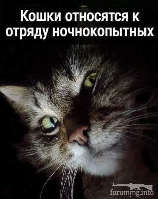 120719 - Смешные видео и фото с животными.