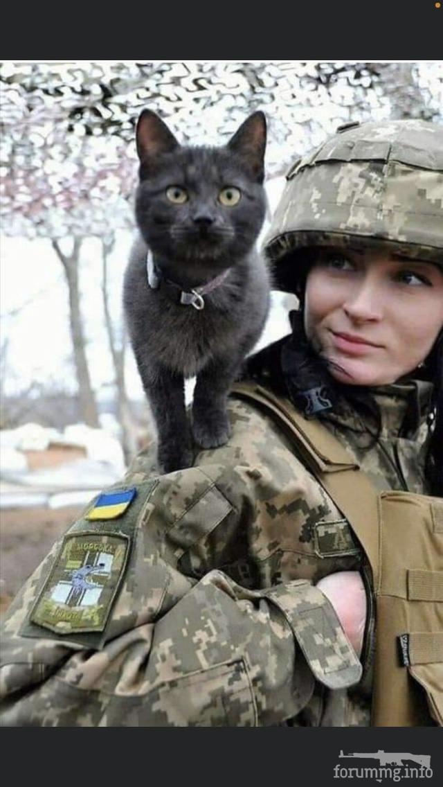 121189 - Животные на войне