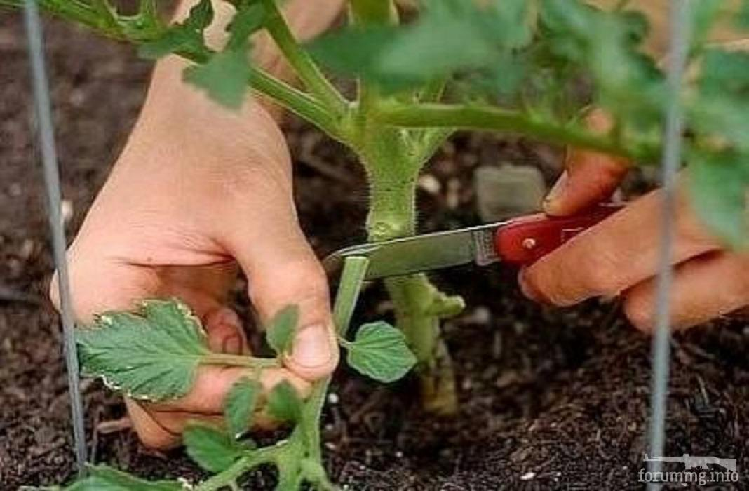121533 - Секреты садоводам и огородникам.