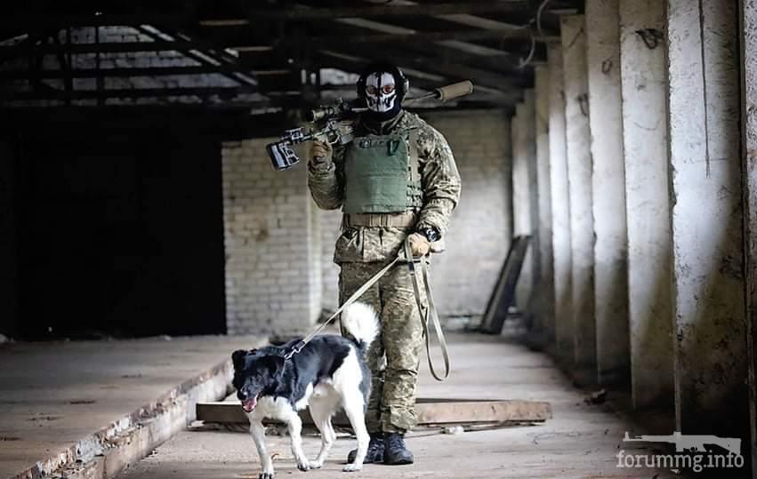 121604 - Животные на войне