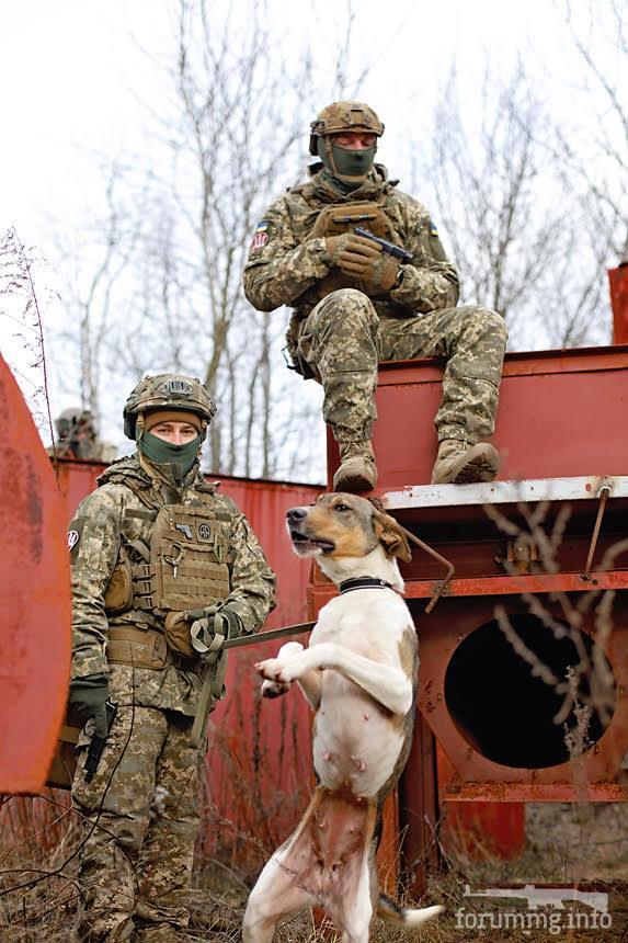 121605 - Животные на войне