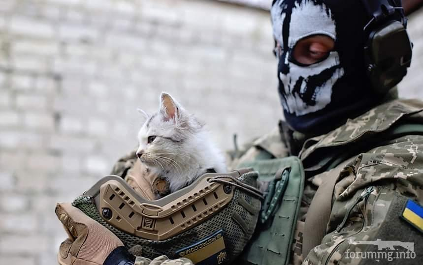 121621 - Животные на войне