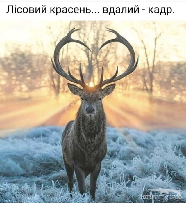 121713 - Красивые животные