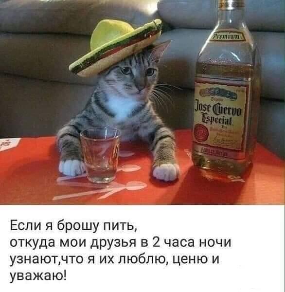 121733 - Пить или не пить? - пятничная алкогольная тема )))