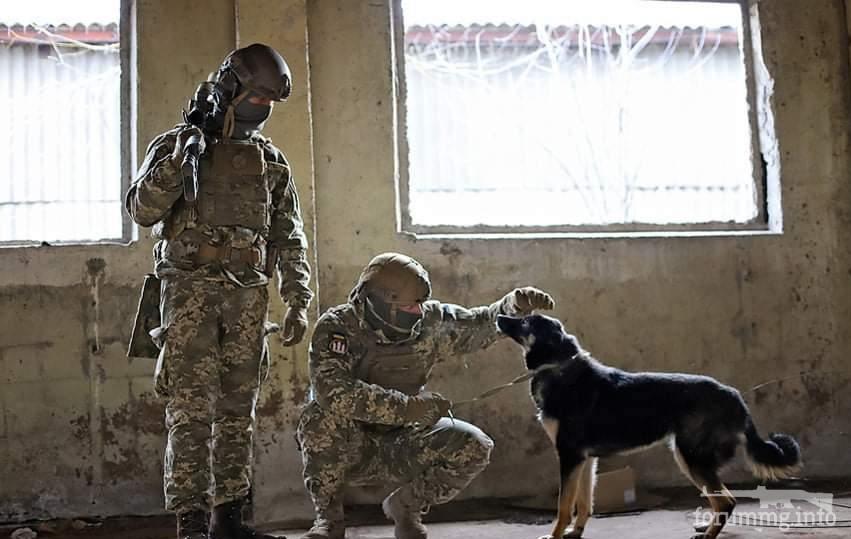 121750 - Животные на войне