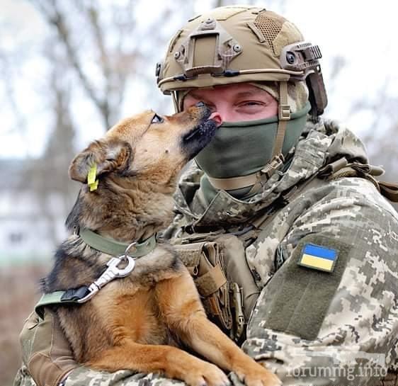 121764 - Животные на войне