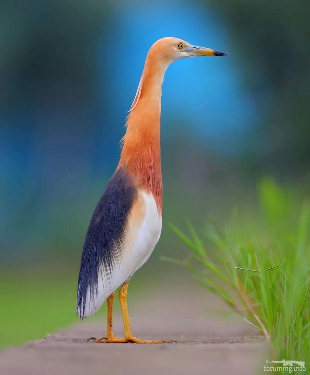 121852 - Красивые животные