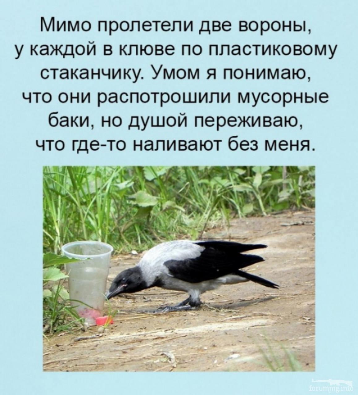 122096 - Пить или не пить? - пятничная алкогольная тема )))