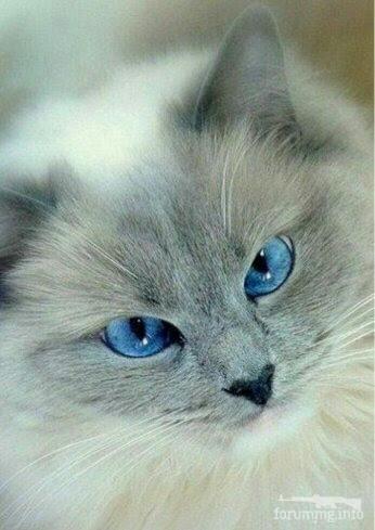 122284 - Красивые животные