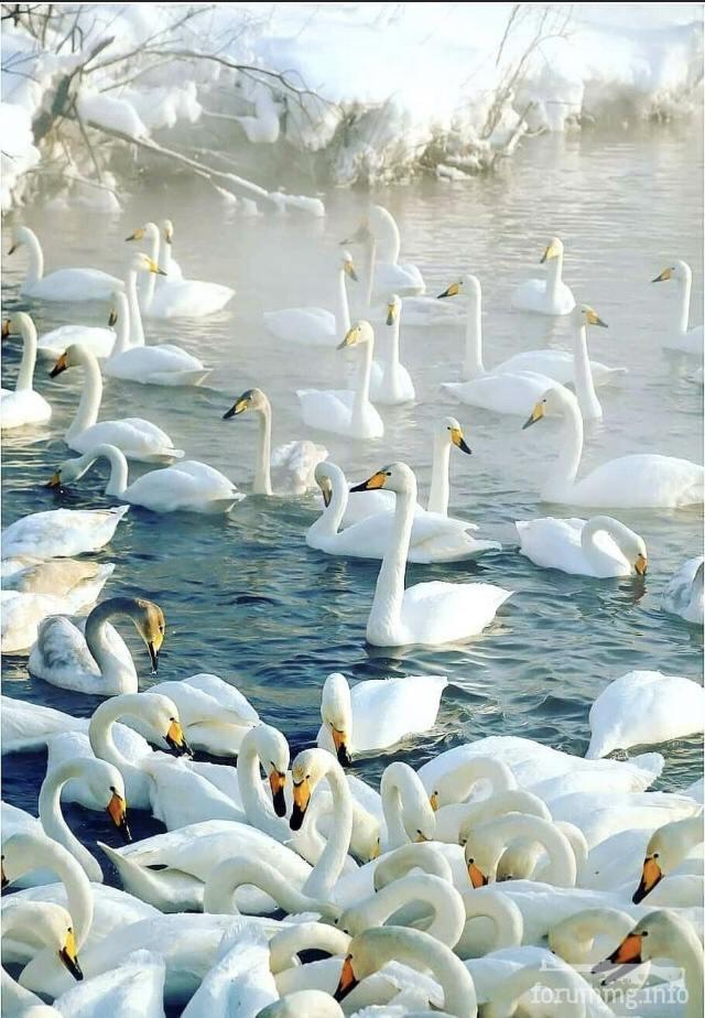 122569 - Красивые животные