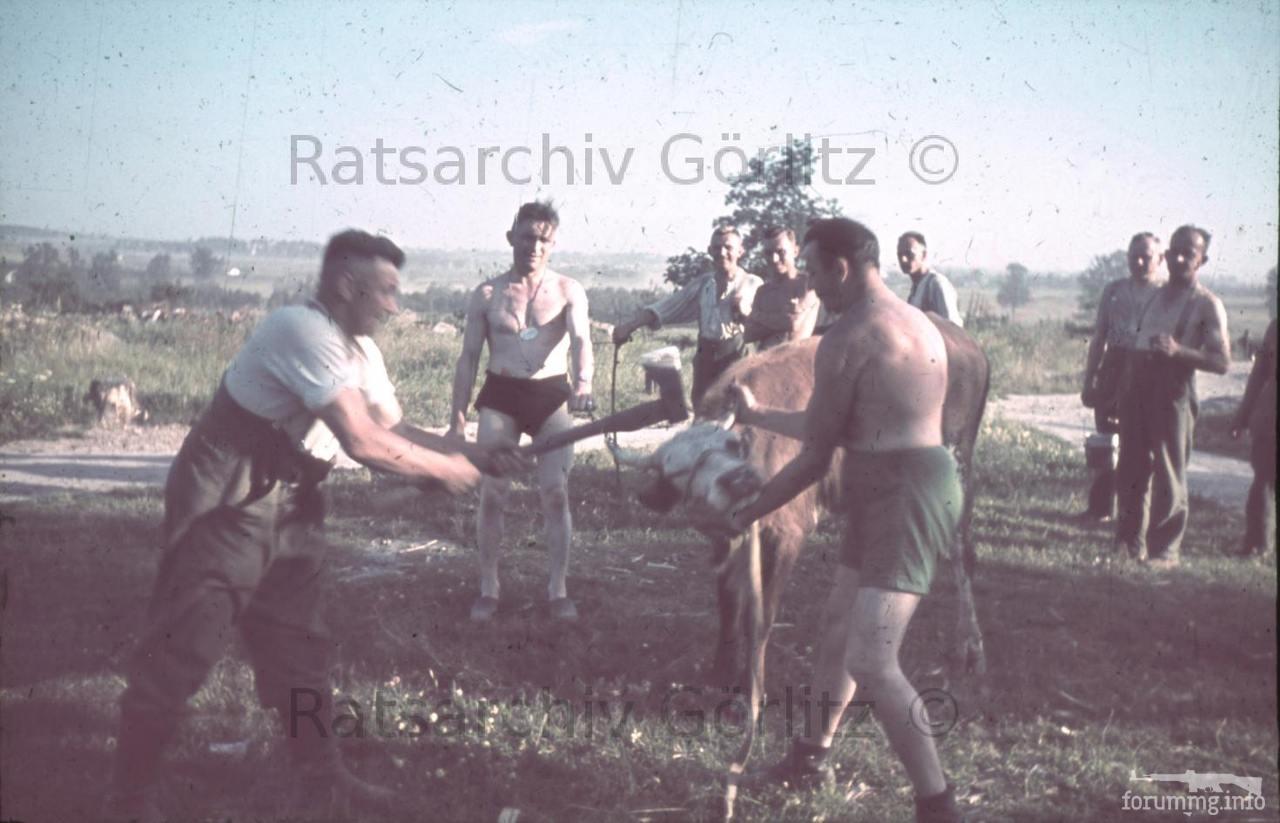 123577 - Оккупированная Украина в фотографиях