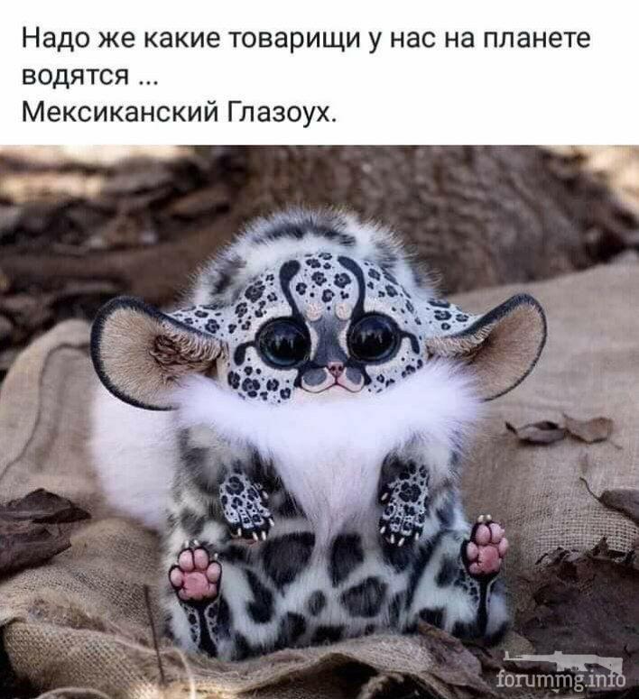 123722 - Красивые животные