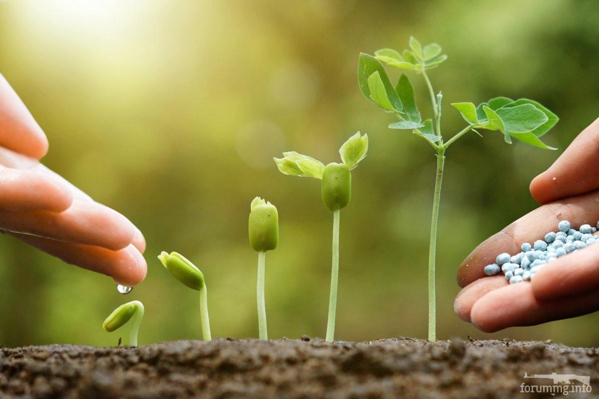 123877 - Секреты садоводам и огородникам.