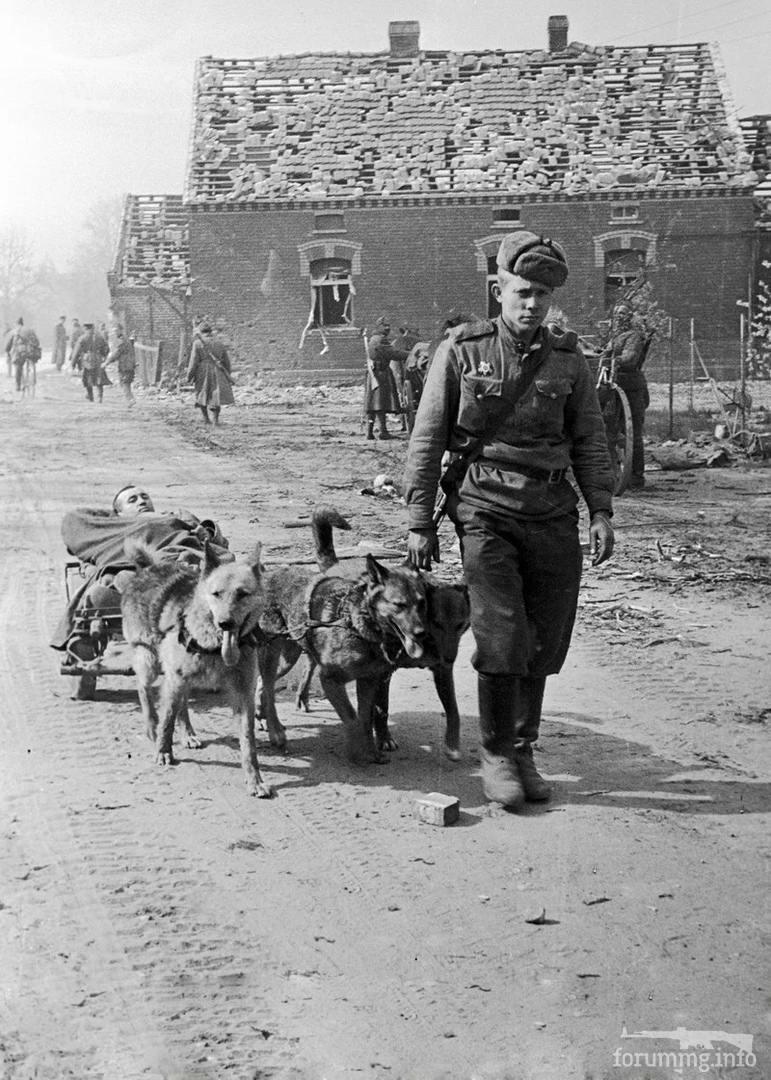 123957 - Военное фото 1941-1945 г.г. Восточный фронт.