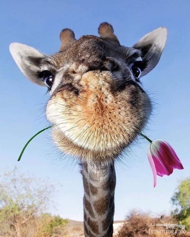 124486 - Красивые животные