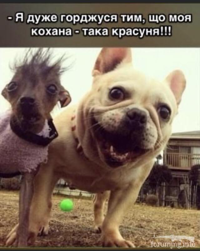 125604 - Смешные видео и фото с животными.