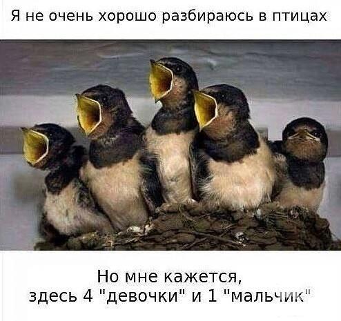 125688 - Смешные видео и фото с животными.