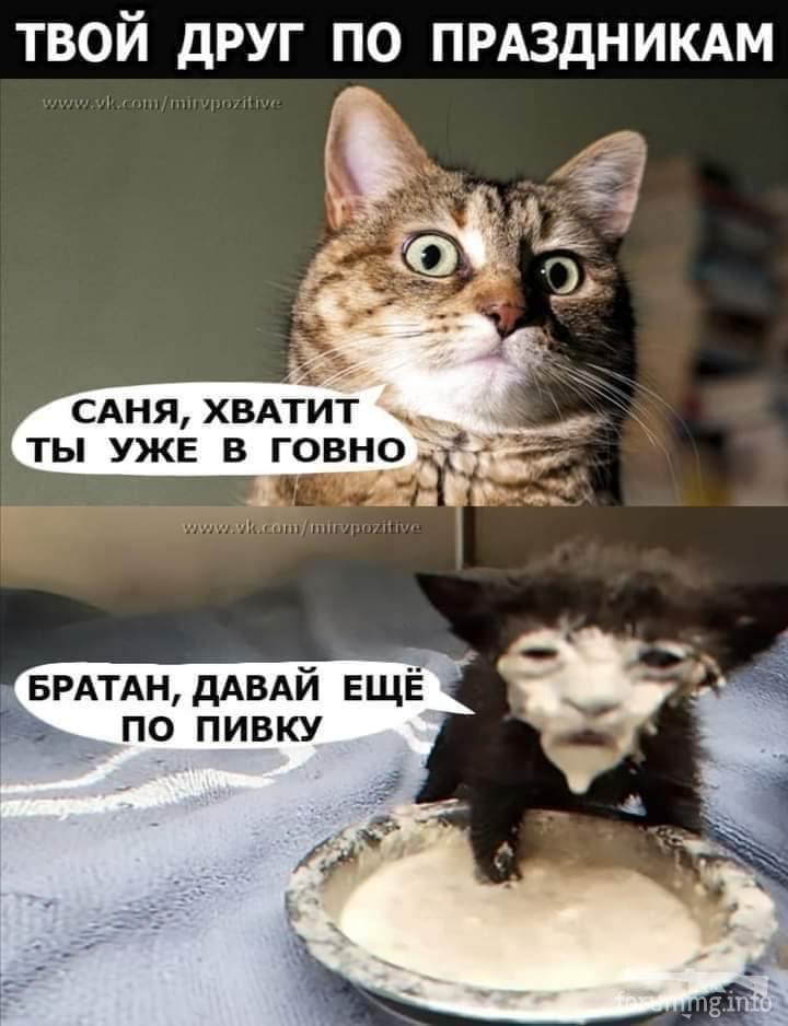 125939 - Смешные видео и фото с животными.