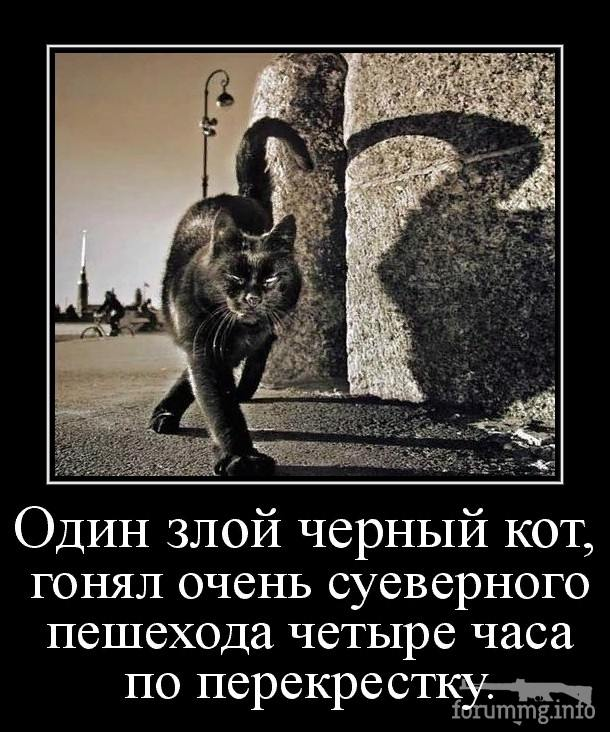 127189 - Смешные видео и фото с животными.