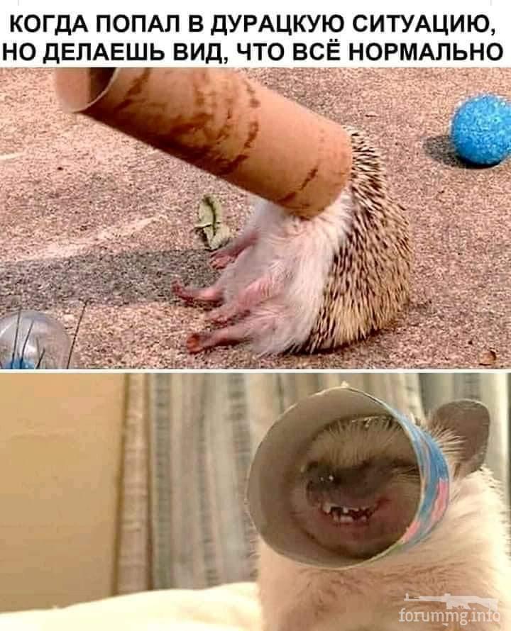 127508 - Смешные видео и фото с животными.