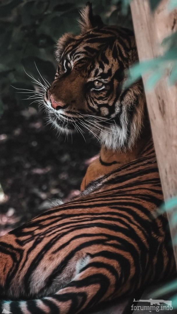 127958 - Красивые животные