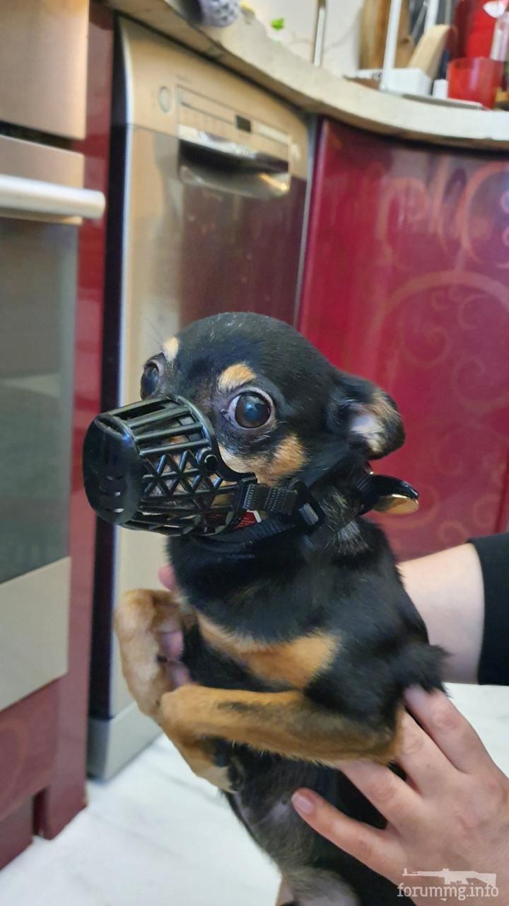 128022 - Смешные видео и фото с животными.
