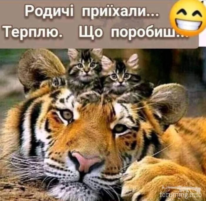 128156 - Смешные видео и фото с животными.