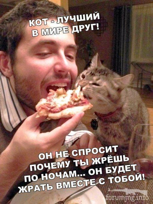 128407 - Смешные видео и фото с животными.