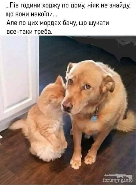 128408 - Смешные видео и фото с животными.