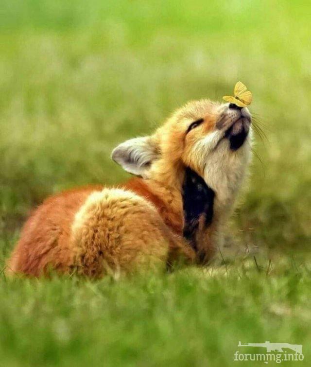 128711 - Красивые животные