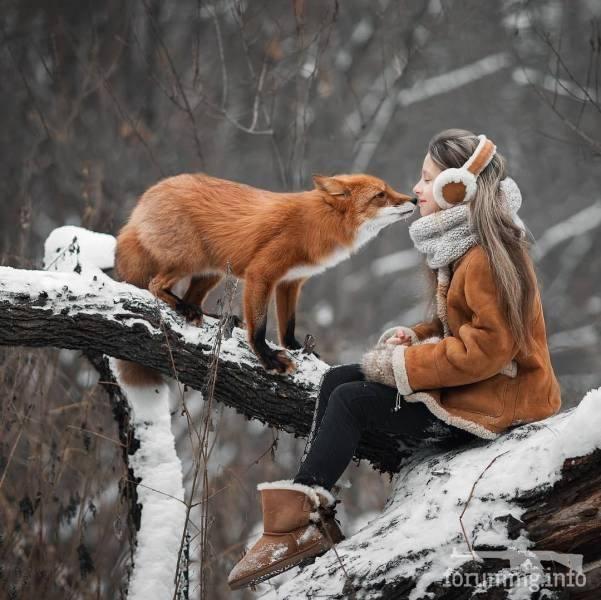 128714 - Красивые животные