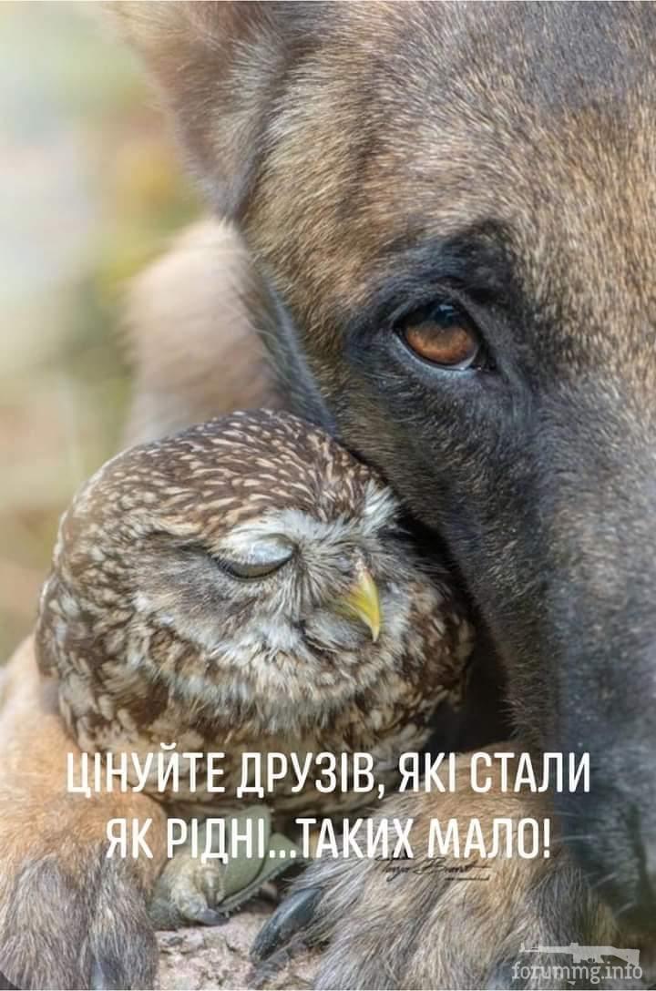 128722 - Красивые животные
