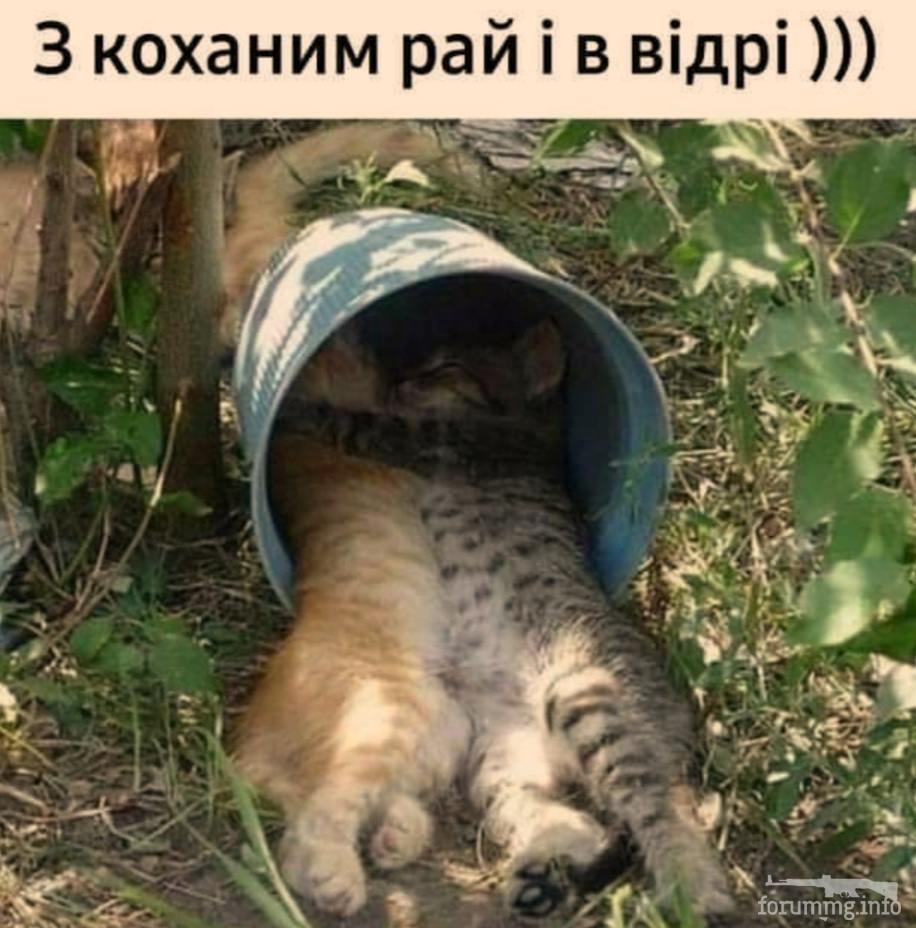 128732 - Смешные видео и фото с животными.