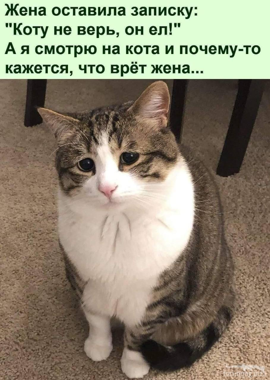 128762 - Смешные видео и фото с животными.