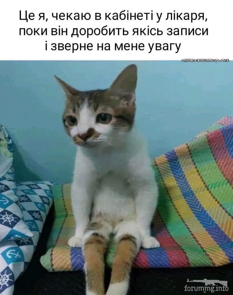 128838 - Смешные видео и фото с животными.
