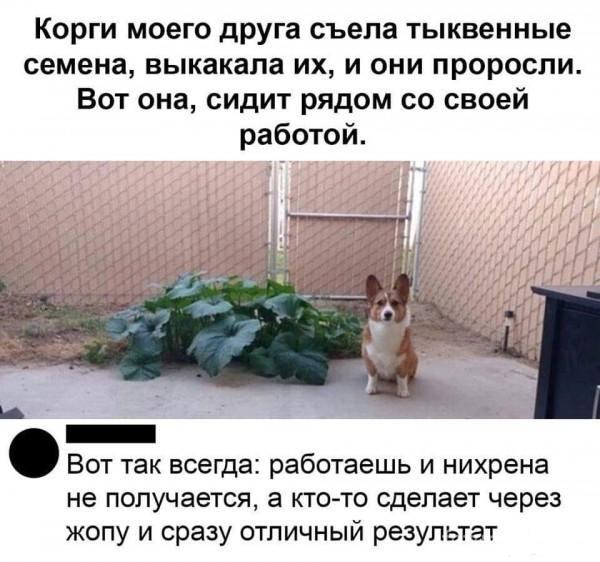 128897 - Смешные видео и фото с животными.