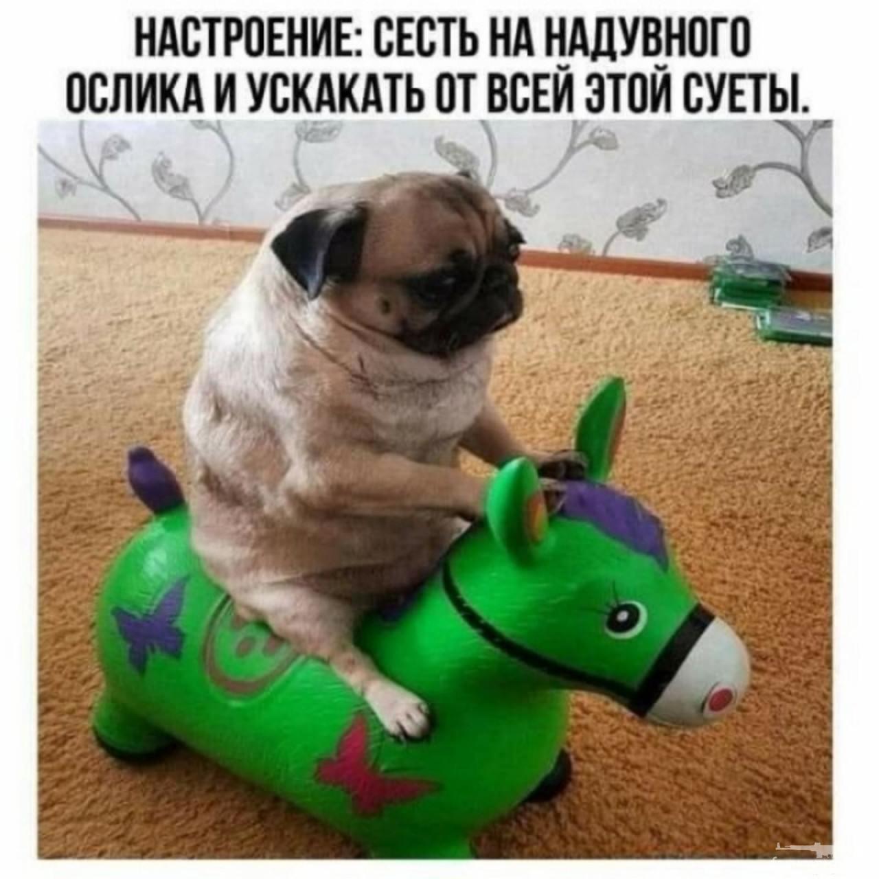 128898 - Смешные видео и фото с животными.