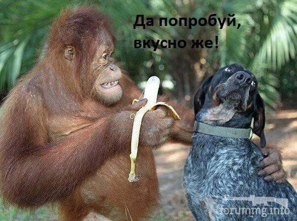 128922 - Смешные видео и фото с животными.