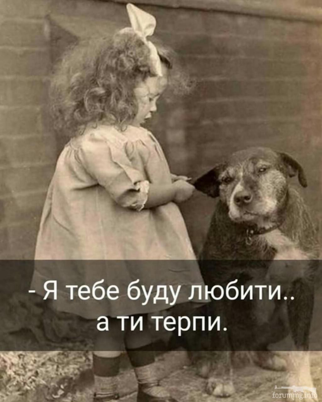 128924 - Смешные видео и фото с животными.